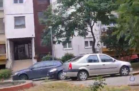 NEVEROVATAN prizor na Novom Beogradu: DIVLJA životinja prošetala kroz blok - ovo nije prvi put (VIDEO)