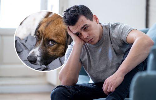 POTRESNO pismo očajnog veterinara: Morao je da uspava pet zdravih pasa, a razlog je PRETUŽAN