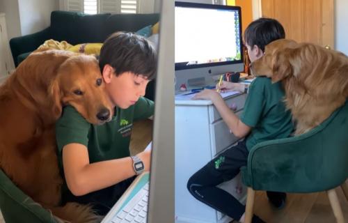 Pomoći ću ti, ali na svoj način: Dok je dečak radio domaći, njegov pas je radio OVO (VIDEO)