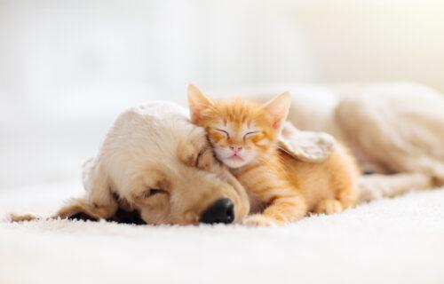 Od mržnje, do ljubavi: Prijateljstvo mačke i psa rastopiće i NAJTVRĐA SRCA (VIDEO)