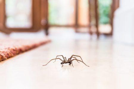 Mnogi ih se plaše, a oni nas čuvaju: Zašto nikada ne SMETE da ubijete pauka u kući