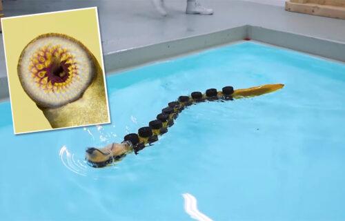 Liči na parazita starog 400 godina: Ovaj robot deluje zastrašujuće u vodi, ali je vrlo koristan (VIDEO)