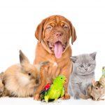 Koga vi BIRATE: psa, mačku ili neku drugu životinju? Kućni ljubimac o kojem maštate otkriva vaš KARAKTER