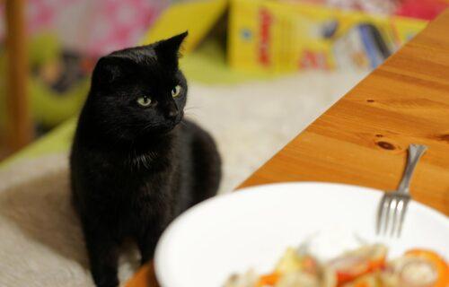 Ova mačka se poigrava s našim mozgovima: Nova optička iluzija koja je zbunila internet (FOTO)