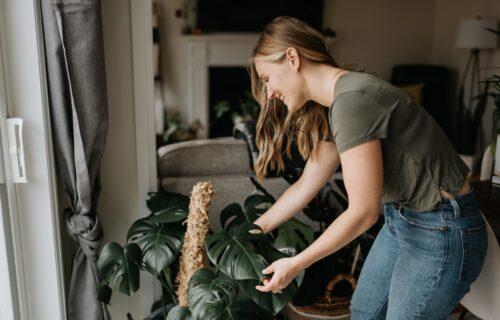 Saksijsko cveće UNESITE u kuću: Pet stvari koje treba da uradite da biste pripremili biljke za ZIMU