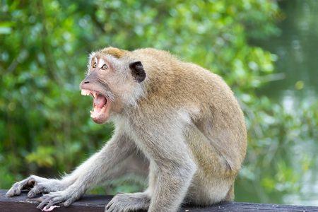 Bizarna SMRT u Indiji: Majmun ubio čoveka CIGLOM, ali tu tragediji nije kraj – poginula i žena