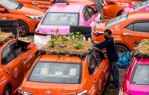 Na krovovima neiskorišćenih vozila uzgajaju POVRĆE: Tajlandski taksisti ovako prkose pandemiji (FOTO)